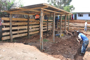 Cow Shed Designs In Kenya